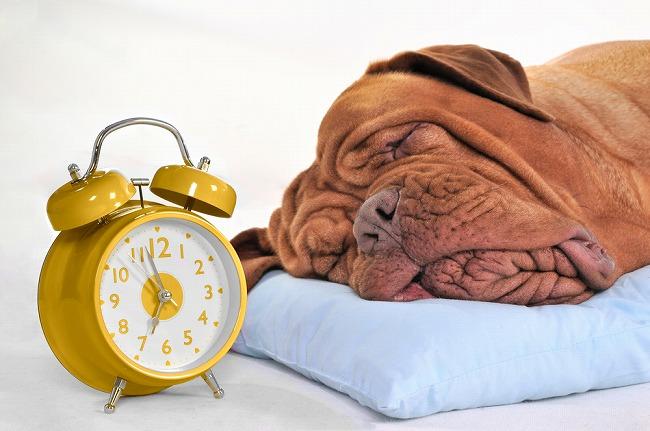 犬の餌の時間