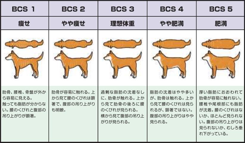犬の適正体体重