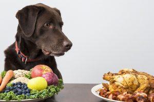 犬の手作りご飯