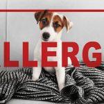 犬のアレルギー