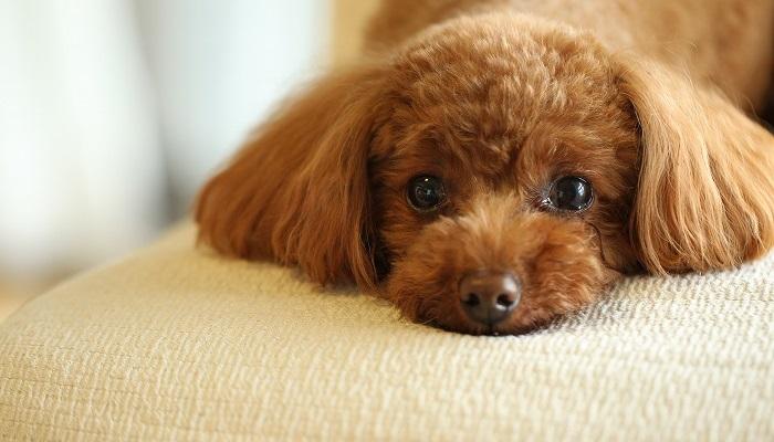 小型犬のドッグフード