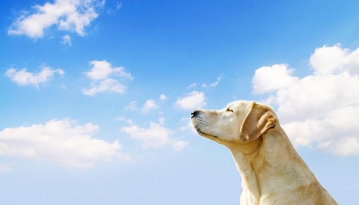 大型犬用ドッグフード