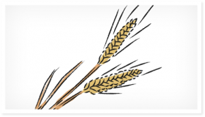 グルテンを含む穀物類には注意が必要